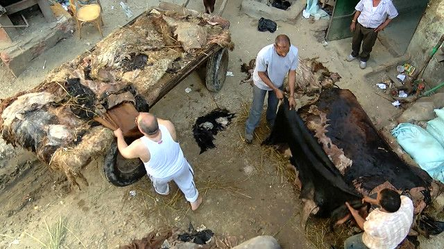 مصريون يعملون بجلد الحيوان