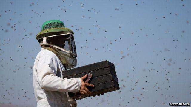 ¿Qué convierte a las abejas africanas en asesinas?