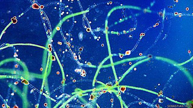 Conheça os microvampiros que vivem ao seu lado