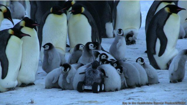 Robô disfarçado de filhote faz imagens inéditas de pinguins