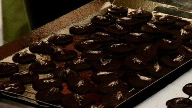 Сверчки в шоколаде