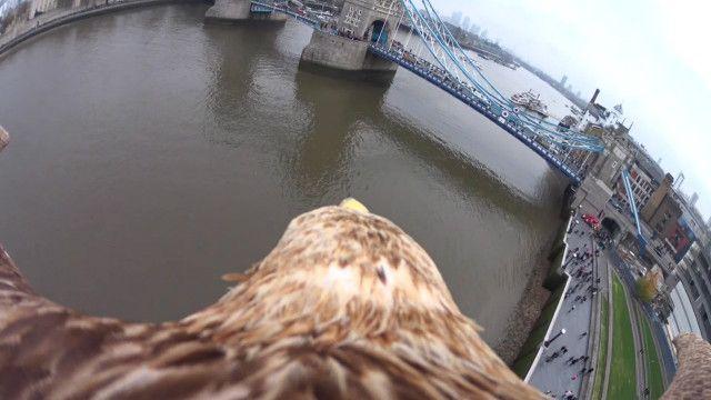 雄鷹鳥瞰倫敦