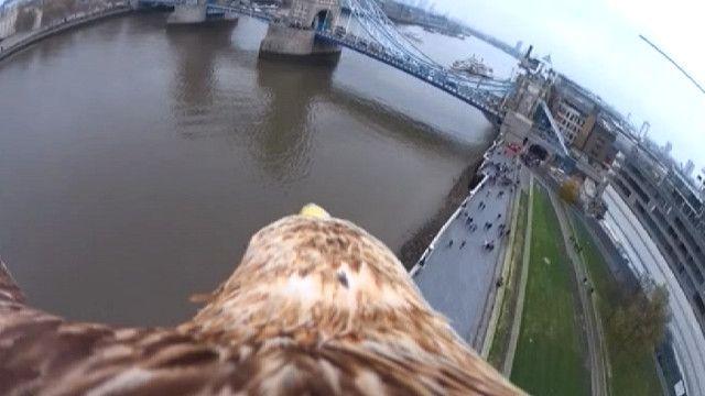 Орел над Лондоном