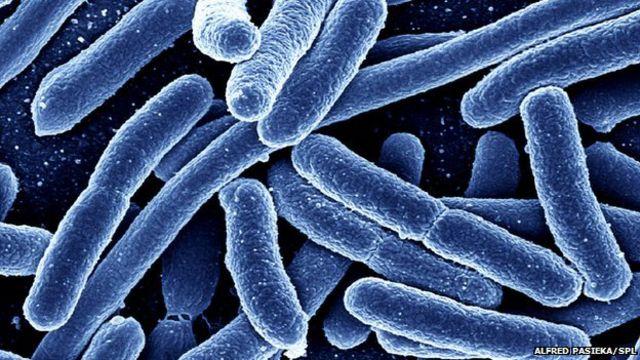 """الجراثيم المقاومة للعقاقير """"ستكون أكثر فتكا من السرطانات"""" بحلول عام 2050"""