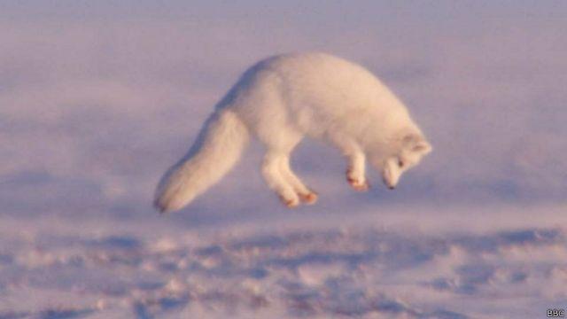Científicos indican que el hielo del Ártico es más resistente de lo que creían