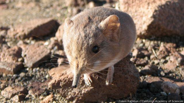 Las extrañas especies descubiertas en 2014