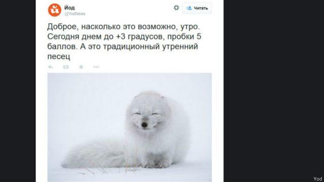 Как песец стал символом падения рубля
