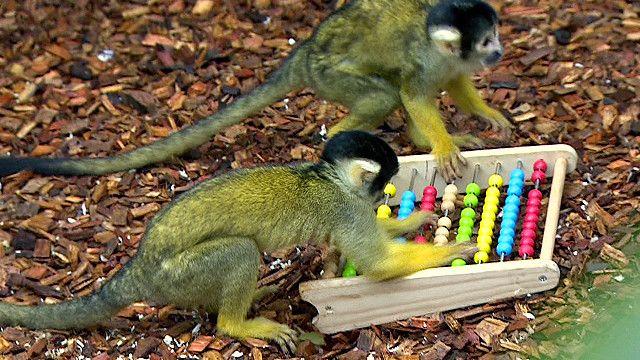 Khỉ tại Vườn thú London