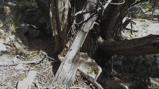 El misterioso rifle de más de 100 años que apareció recostado en un árbol
