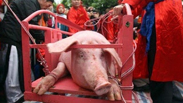 Lễ hội chém lợn tại làng Ném Thượng (Ảnh: Tổ chức Động vật châu Á cung cấp)