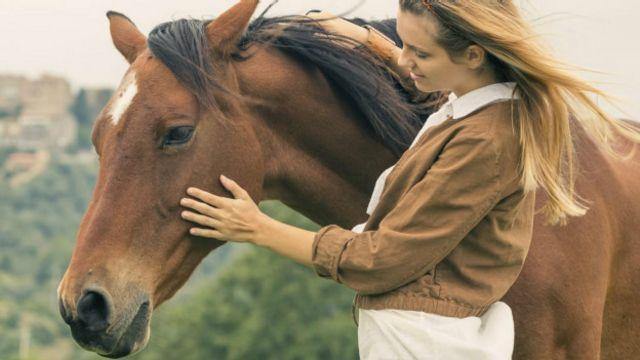 A impressionante memória dos cavalos