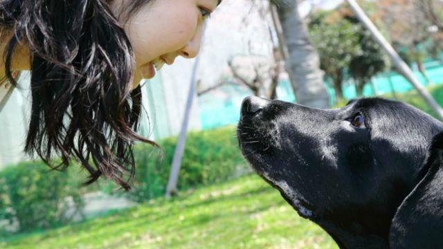 Por que nos apegamos aos cães?
