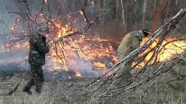 Пожары около Чернобыльской АЭС локализованы