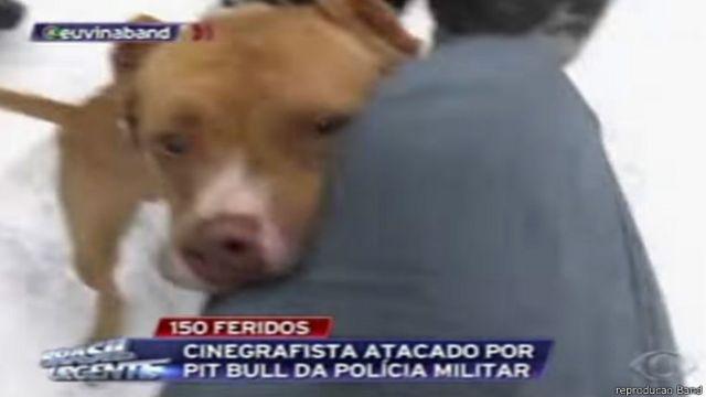 Uso de pitbulls por PM do Paraná é considerado 'inadequado' por especialistas