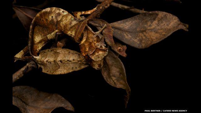 En fotos: las especies que logran el camuflaje perfecto