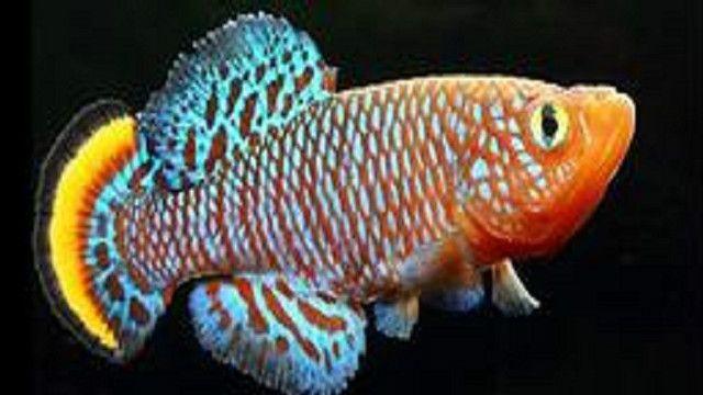 أنواع الأسماك الأكثر غرابة على وجه الأرض