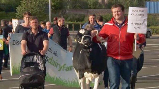 Молочный протест в Шотландии