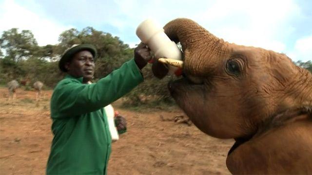 Эдвин Люсичи со слоненком Арубой, Кения