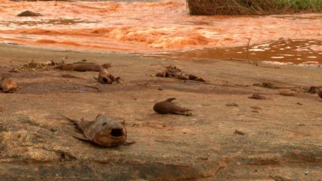 Conheça o Rio Doce antes e depois da enxurrada de lama