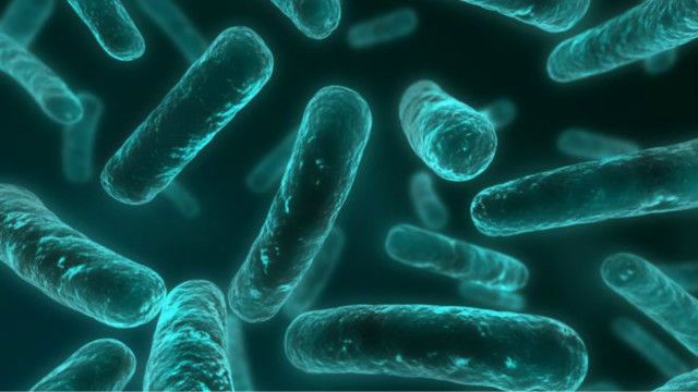 antibiotics_resistance_bacteria_