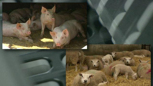 antibiotic_farming
