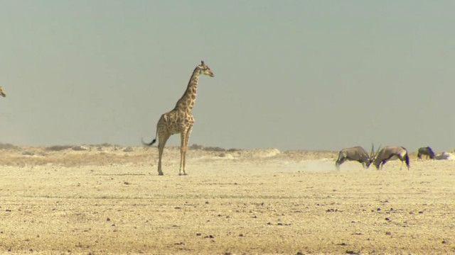 _namibia_drought