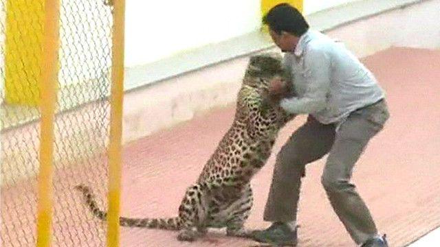 Leopardo ataca una escuela en India