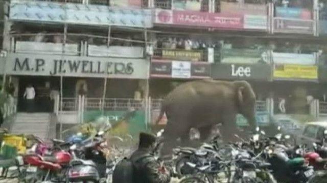 Слон на улице индийского города