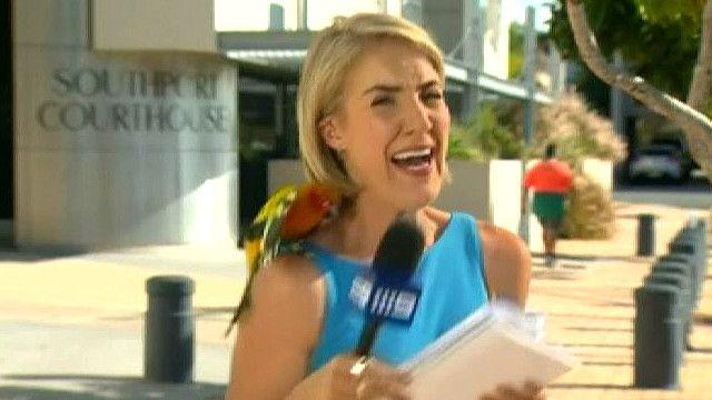 Попугай приземлился на корреспондента