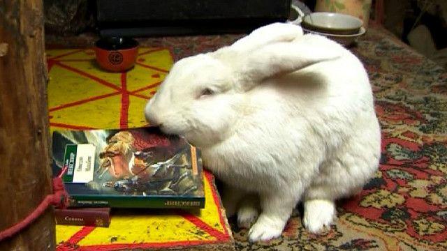 Кролик грызет книгу
