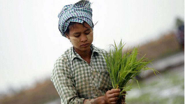 farmer myanmar