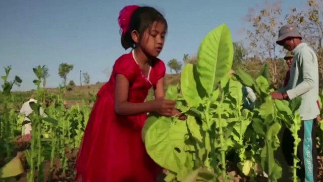 Дети на табачной плантации