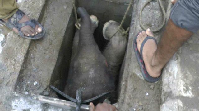 हाथी के बच्चे को बचाया