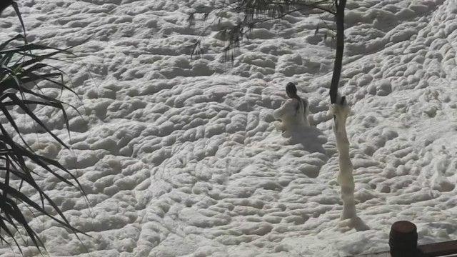 Hình ảnh một người Úc bị sóng biển nhấn chìm dưới lớp bọt biển dày đặc do bão lớn gây ra