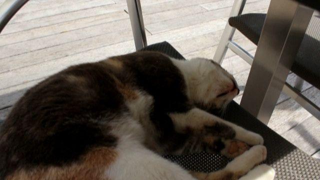 """#ВідеоблогЄвро-2016: """"Навіть коти тут відпочивають"""""""