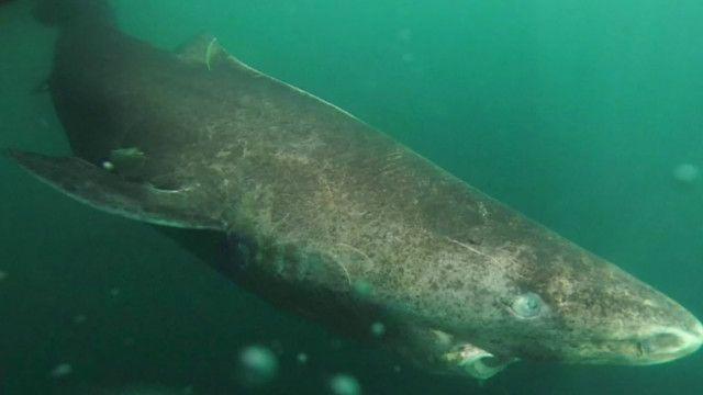 Учені знайшли 400-річну акулу