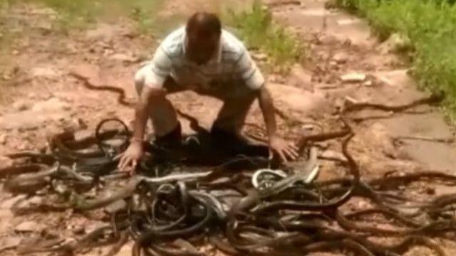 Змеелов, который спасает змей