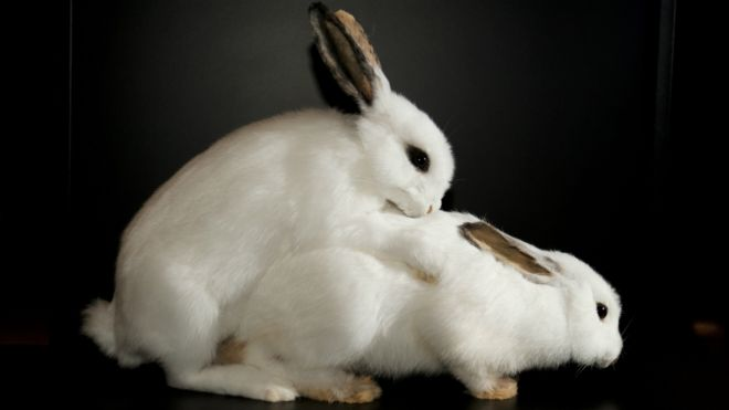 Секс тварини з людьми