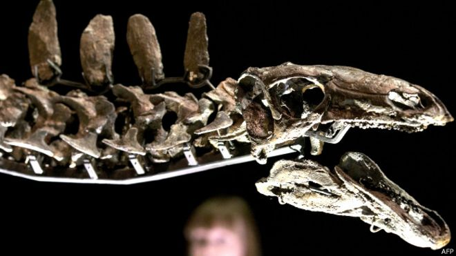 Картинки по запросу Скелет стегозавра