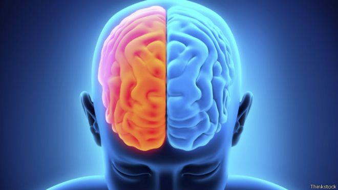 Es posible llevar una vida normal con solo medio cerebro? - BBC News ...
