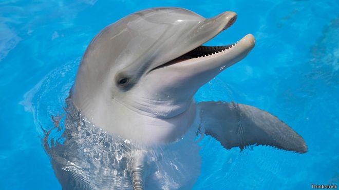 Скачать бесплатно торрент дельфин