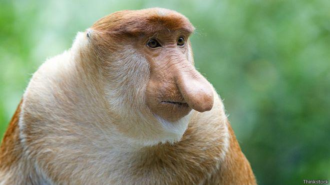 10 características sorprendentes de algunos animales - BBC News Mundo 4920175c61b