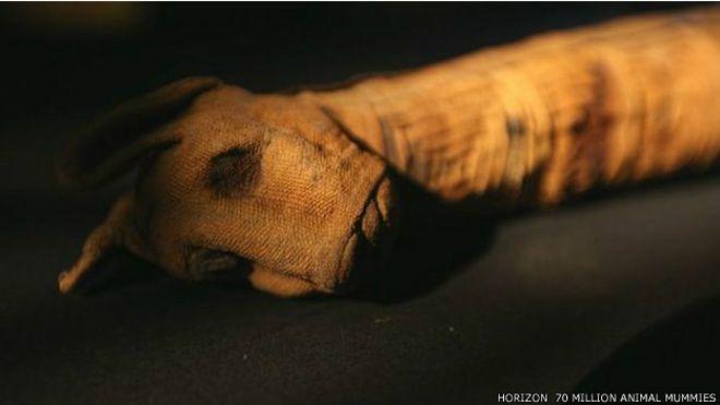 http://ichef.bbci.co.uk/news/ws/660/amz/worldservice/live/assets/images/2015/05/11/150511043738_egypt_animal_mummies_624x351_horizon70millionanimalmummies.jpg