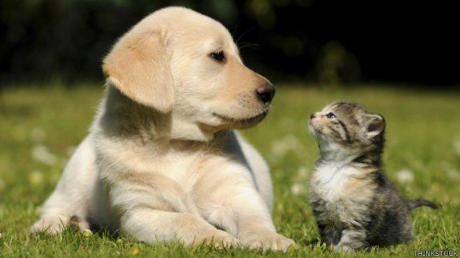 Un perro y un gato