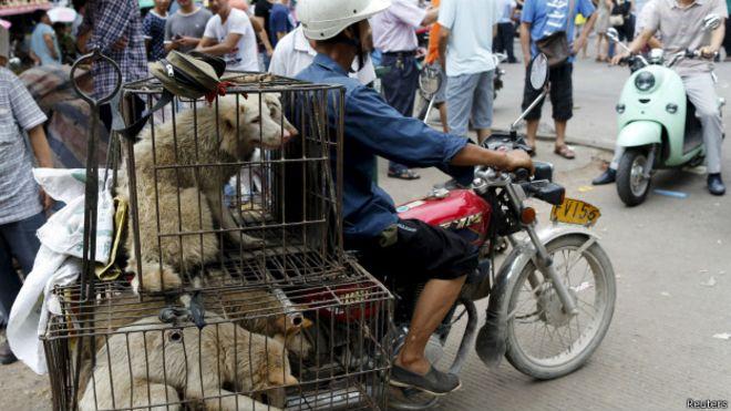 Картинки по запросу В Китае требуют запретить фестиваль собачьего мяса