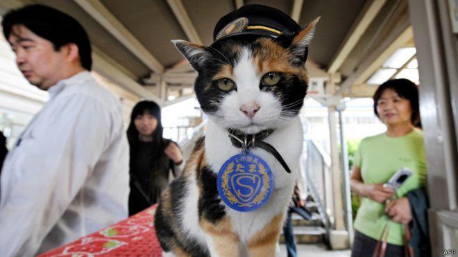 В Японии похоронили кошку, служившую начальником вокзала