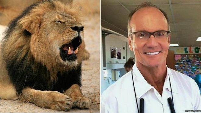 El león Cecil y Walter Palmer