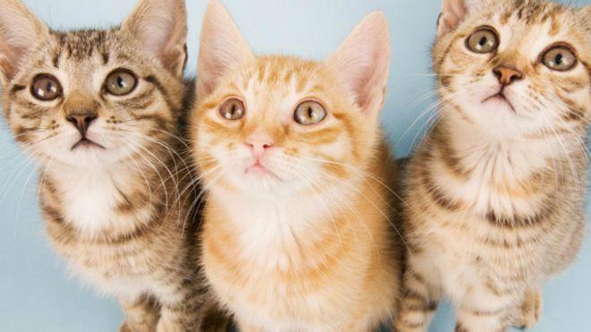 Download 67+  Gambar Kucing Yg Lg Sedih Paling Lucu