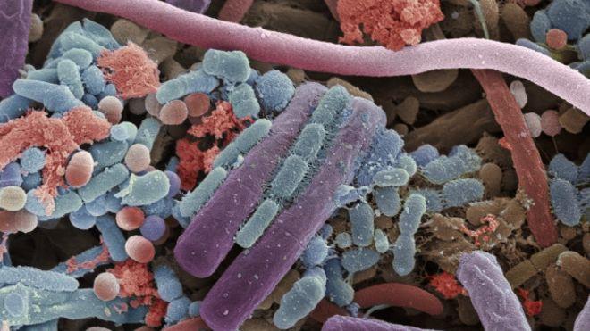 150918142405_micropia_microbiota_624x351_micropia_nocredit Micróbios: Você não os Vê, Mas Eles Habitam em Você