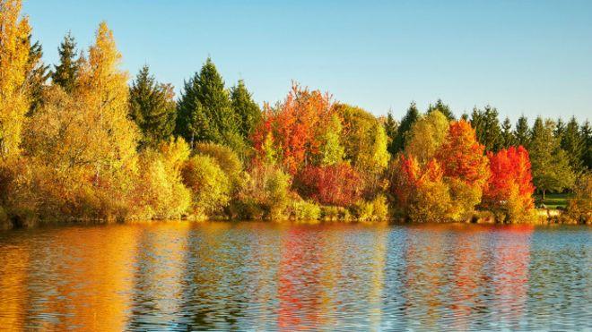 Por Qué Las Hojas De Los árboles Cambian De Color En Otoño Bbc